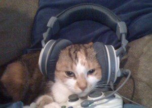 cat uses headset for cs go